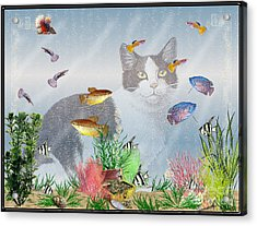 Cat Watching Fishtank Acrylic Print by Terri Mills