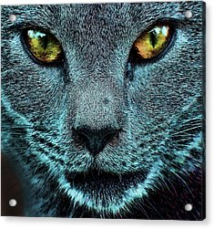 Cat With Golden Eyes Acrylic Print
