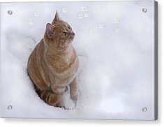 Cat With Snowflakes Acrylic Print