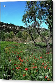 Catalan Countryside In Spring Acrylic Print