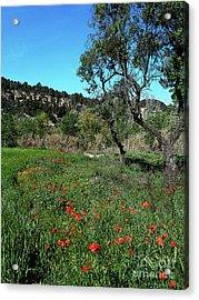 Catalan Countryside In Spring Acrylic Print by Don Pedro De Gracia