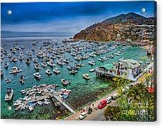 Catalina Island  Avalon Harbor Acrylic Print by David Zanzinger