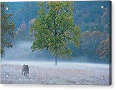 Acrylic Print featuring the photograph Cataloochee Morning #1 by Rick Hartigan