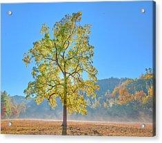 Acrylic Print featuring the photograph Cataloochee Morning #2 by Rick Hartigan