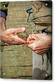 Catch And Release Rainbow Trout Acrylic Print by Jennie Marie Schell