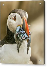 Catch Of The Day Acrylic Print by Brian Tarr