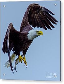Catch Of The Day Acrylic Print by Jeff at JSJ Photography