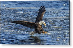 Catching Lunch Acrylic Print by E Mac MacKay