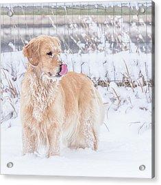 Catching Snowflakes Acrylic Print