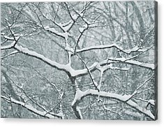Catching The Snow Acrylic Print by JAMART Photography