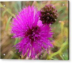 Acrylic Print featuring the digital art Catclaw Pink Mimosa  by Shelli Fitzpatrick