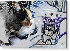 Catfinated Kitty Acrylic Print