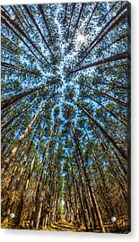 Cathedral In The Pines Acrylic Print