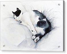 Catnap 1-2 Acrylic Print