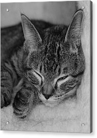 Catnap Acrylic Print