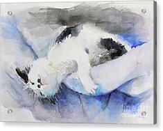 Catnap2-1 Acrylic Print