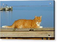 Cats 29 Acrylic Print by Joyce StJames