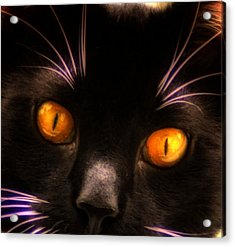 Cats Eyes Acrylic Print by Bill Cannon