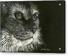 Cat's Gaze Acrylic Print by Jessica Kale