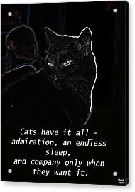 Cats Have It All Acrylic Print