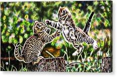 Cats Acrylic Print by Marvin Blaine