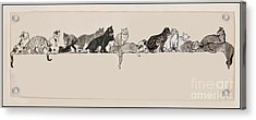 Cats On A Ledge Acrylic Print by MotionAge Designs