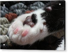 Acrylic Print featuring the photograph Cats Paw by Kim Henderson