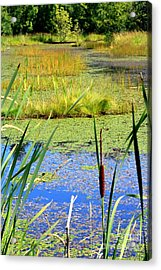 Cattail Acrylic Print by Chris Anderson