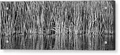 Acrylic Print featuring the photograph Cattail Reflection  by Britt Runyon