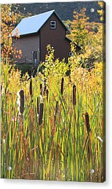 Cattails And Barn Acrylic Print by Roupen  Baker