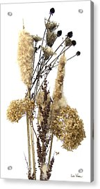 Acrylic Print featuring the digital art Cattails And November Flowers II by Lise Winne