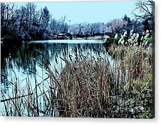 Acrylic Print featuring the photograph Cattails On The Water by Sandy Moulder