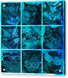 Cattitudes Acrylic Print