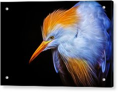 Cattle Egret Electrified Acrylic Print by David Gn