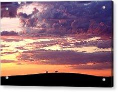 Cattle Ridge Sunset Acrylic Print
