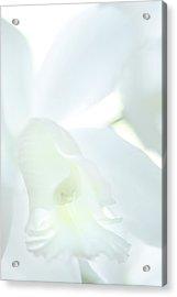 Cattleya Orchid #1 Acrylic Print