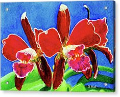 Cattleya Orchids Flowers #215 Acrylic Print by Donald k Hall