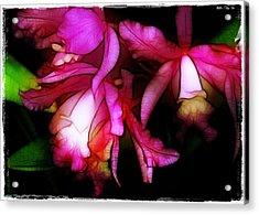 Cattleyas Acrylic Print by Judi Bagwell