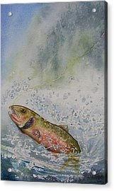 Caught Acrylic Print by Gale Cochran-Smith