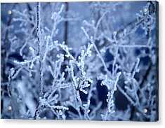 Caught In The Ice Acrylic Print by Jennilyn Benedicto