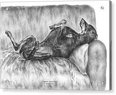 Caution Guard Dog - Doberman Pinscher Art Print Acrylic Print