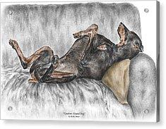 Caution Guard Dog - Doberman Pinscher Print Color Tinted Acrylic Print