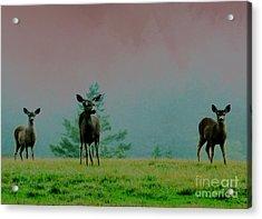 Cautious Neighbors Acrylic Print by JoAnn SkyWatcher