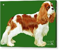 Acrylic Print featuring the painting Cavalier King Charles Spaniel by Marian Cates