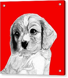 Cavalier King Charles Spaniel Puppy In Red Acrylic Print
