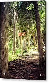 Acrylic Print featuring the photograph Cave Point Trails by Joel Witmeyer