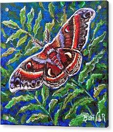 Cecropia Moth Acrylic Print by Gail Butler