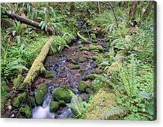 Acrylic Print featuring the photograph Cedar Creek Near Cottage Grove Lake #1 by Ben Upham III