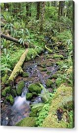 Acrylic Print featuring the photograph Cedar Creek Near Cottage Grove Lake #2 by Ben Upham III