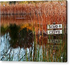 Cedar Pond Acrylic Print by Robert Clayton